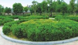 新干县城南新区市政广场